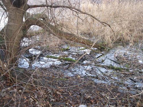 ROTTEN TREE WITH TREE DEBRIS LEFT DUMPED IN LAKE