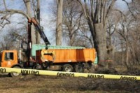 Tearing out Rotting Trees Used by the Homeless in Prospect Park